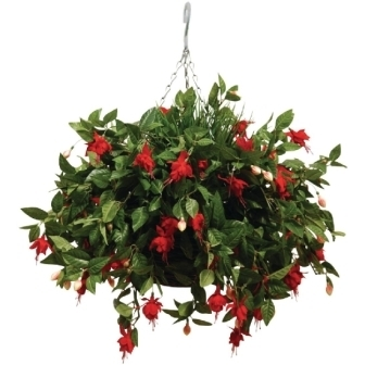 "Hanging Basket - 12"" with Artificial Fushcias"